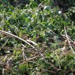 garden waste disposal in Bournemouth