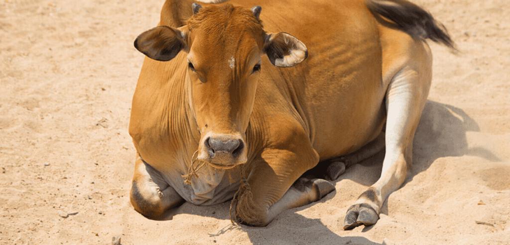 cattle bedding sand | aggregates